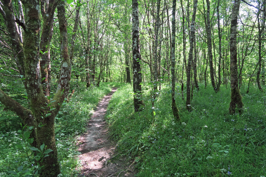 A lovely walk through the woods in Spring