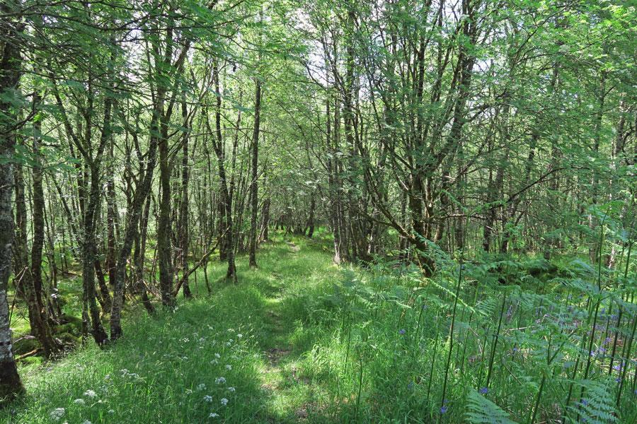 Head west bback along the high woodland path