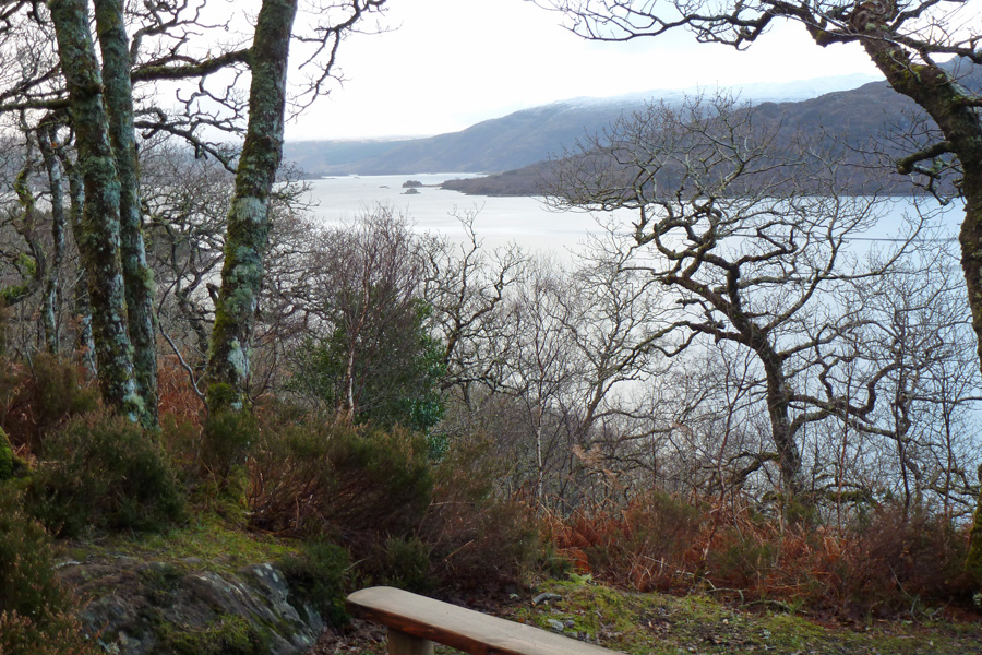 A bench with a view at the southern end of the Salen Oakwoods walk
