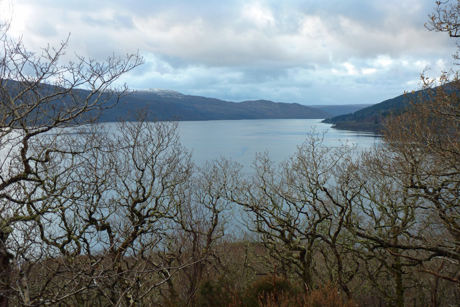Over the oak tree tops to Loch Sunart on a Decembers day