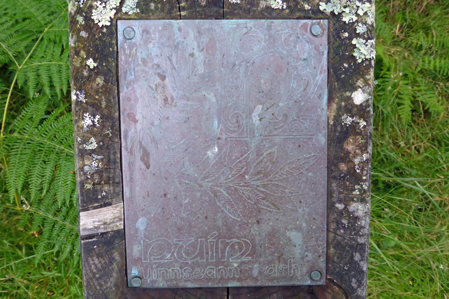 The Gaelic Alphabet Trail - N  is for nuin - the gaelic name for an ash tree