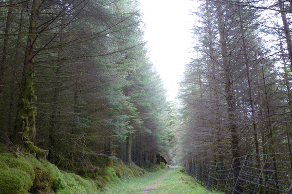 The path through the Forestry Commission plantation