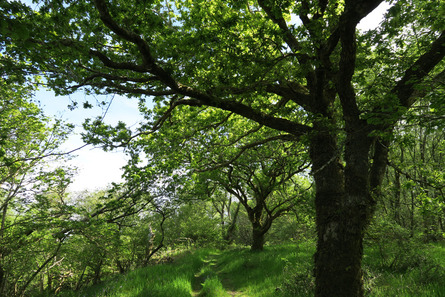 The path through the woodland