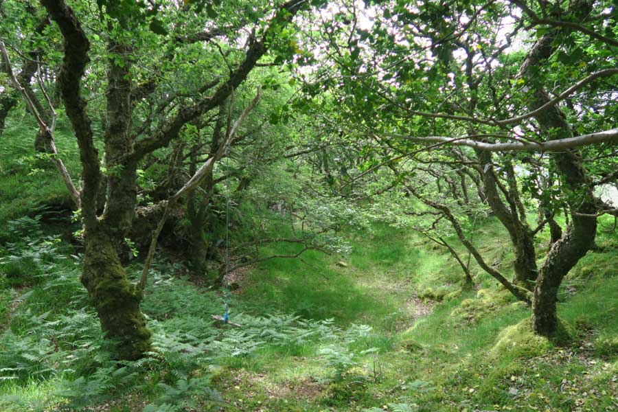 Ancient Atlantic Oak woodlands on Shielfoot Torr