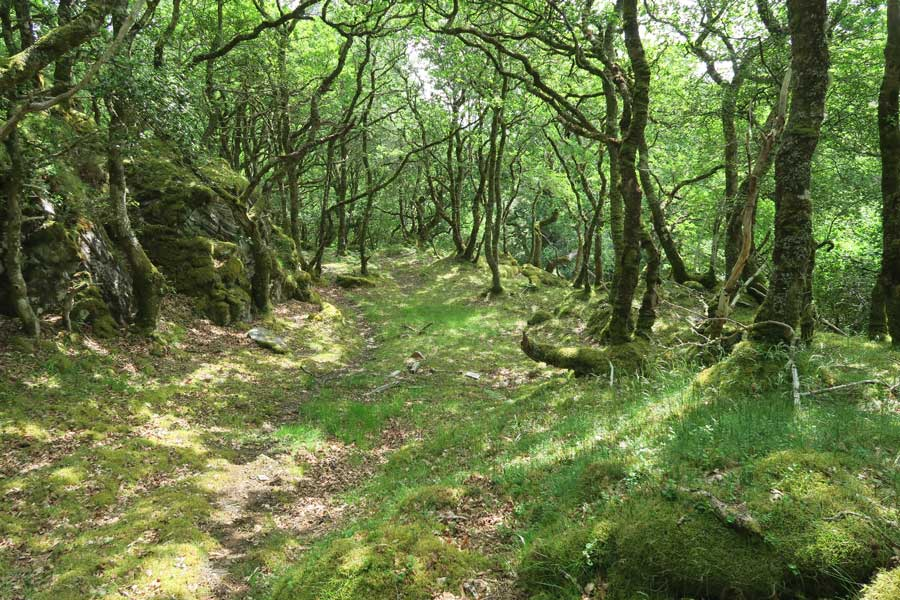 Walking through the ancient Atlantic oak woodlands on Shielfoot Torr