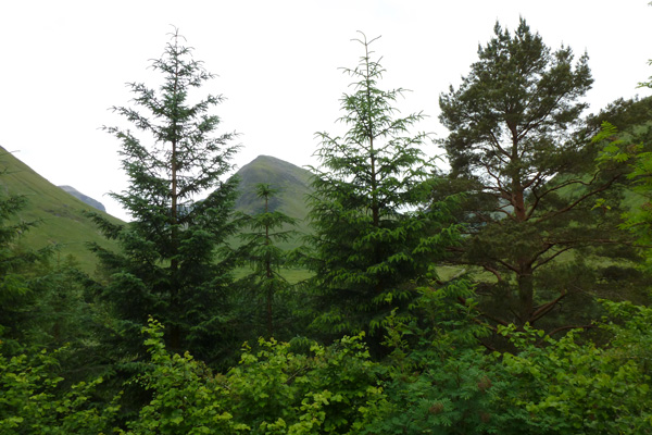 Views from Signal Rock, Glen Coe, now obscured by trees