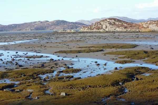 Low tide at Kentra Bay