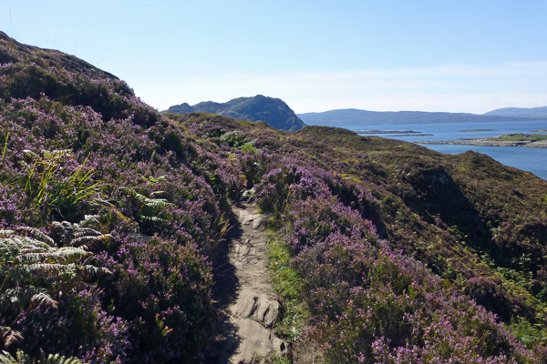 The heather lined paths to the beach can be a little boggy and uneven in places though are an absolute delight on a sunny day.