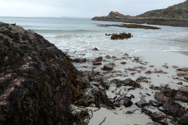 Kelp beds provide good foraging grounds for otters