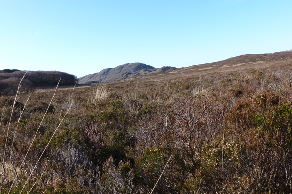 A fine example of heather heathland at Sonachan
