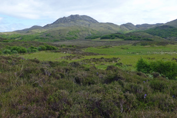 Wild Ardnamurchan in May