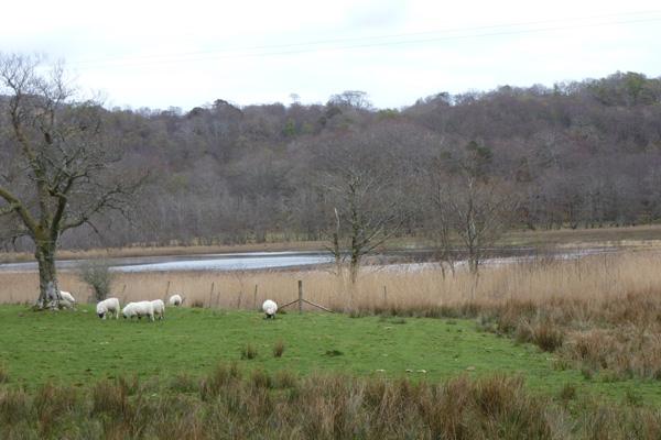 Loch nan Eala (Loch of the swans)