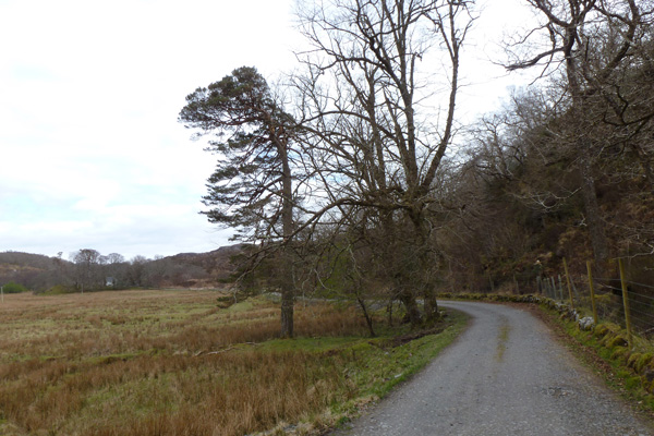 The farm track past Glen Cottage