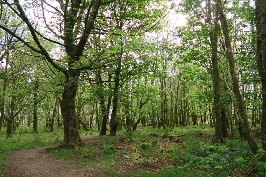 Achnaha Community Woodland