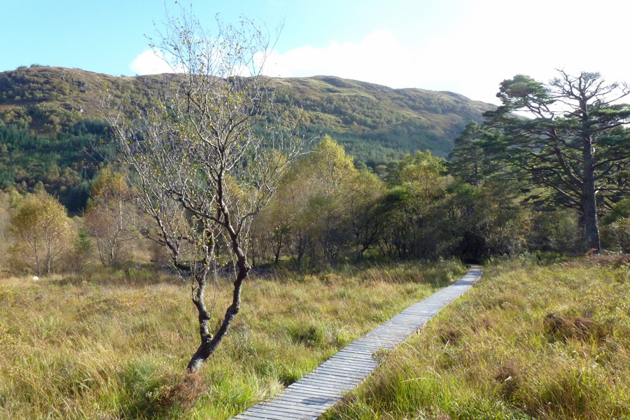 A boardwalk to the River Strontian