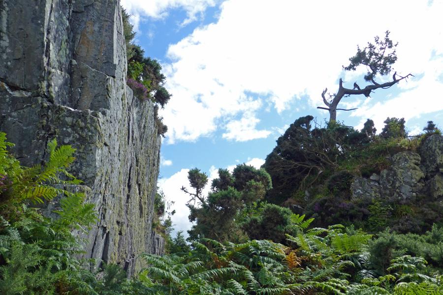 The escarpment  - a lovely walk to the far beaches