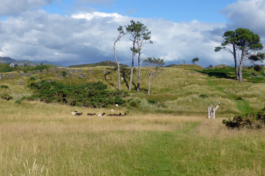 The dune slacks and pasture behind the beach