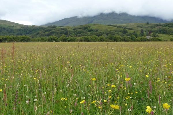 Species rich meadow behind Cuil Bay