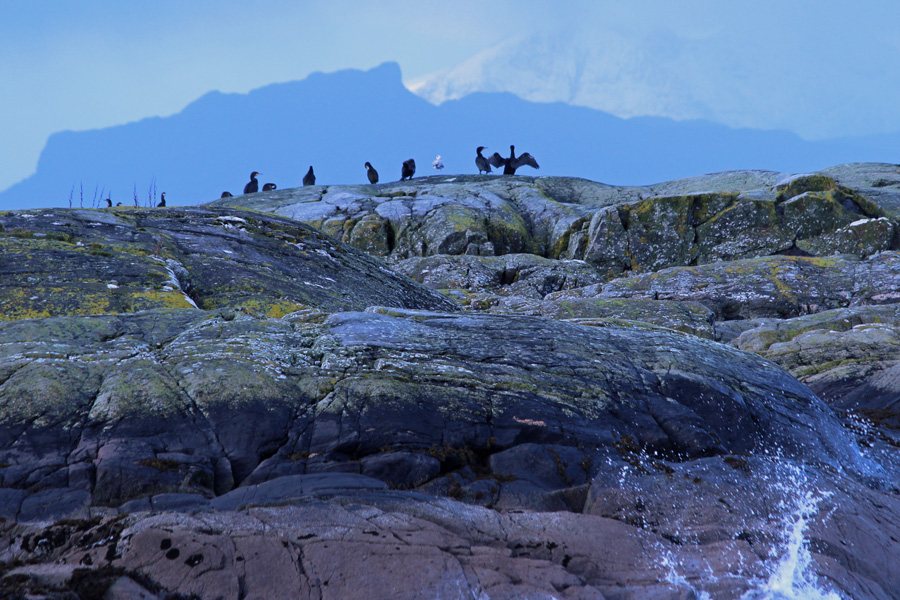 Cormorants on the rocks looking out to Eigg and Rum