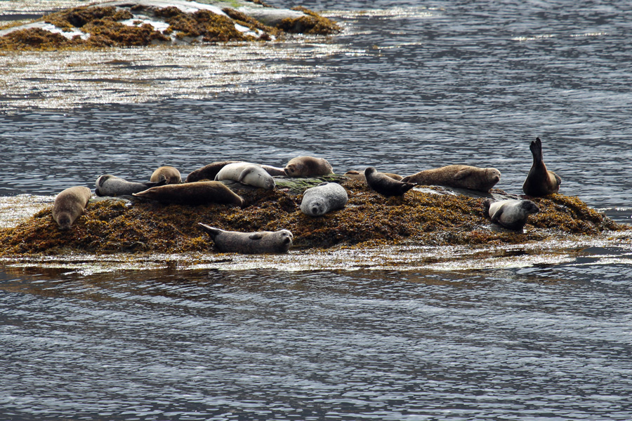 You will almost certainly see seals off Garbh Eilean