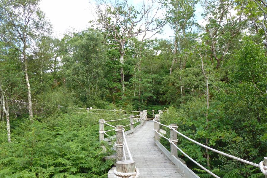 The boardwalk to the Garbh Eilean wildlife hide
