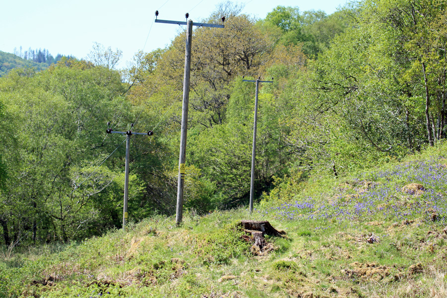 The area by the power line is a good spot for seeing chequered skippers