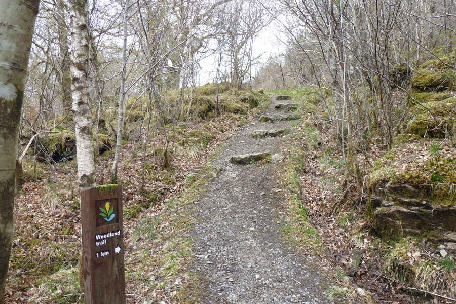 The woodland trail through Glasdrum National Nature Reserve
