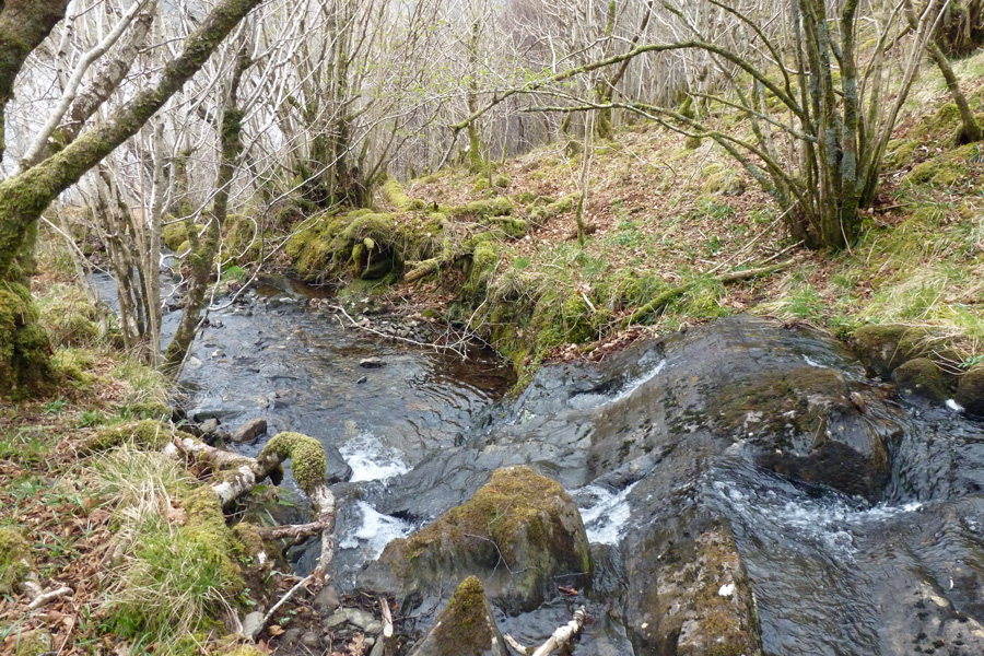 One of the watercourses running through Glasdrum National Nature Reserve