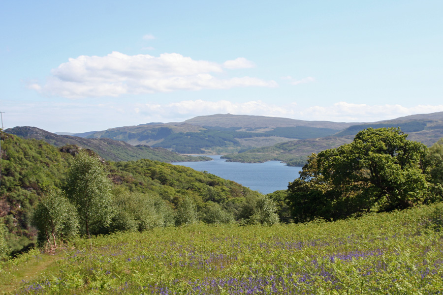 Looking towards Loch Sunart from Glenborrodale RSPB nature reserve