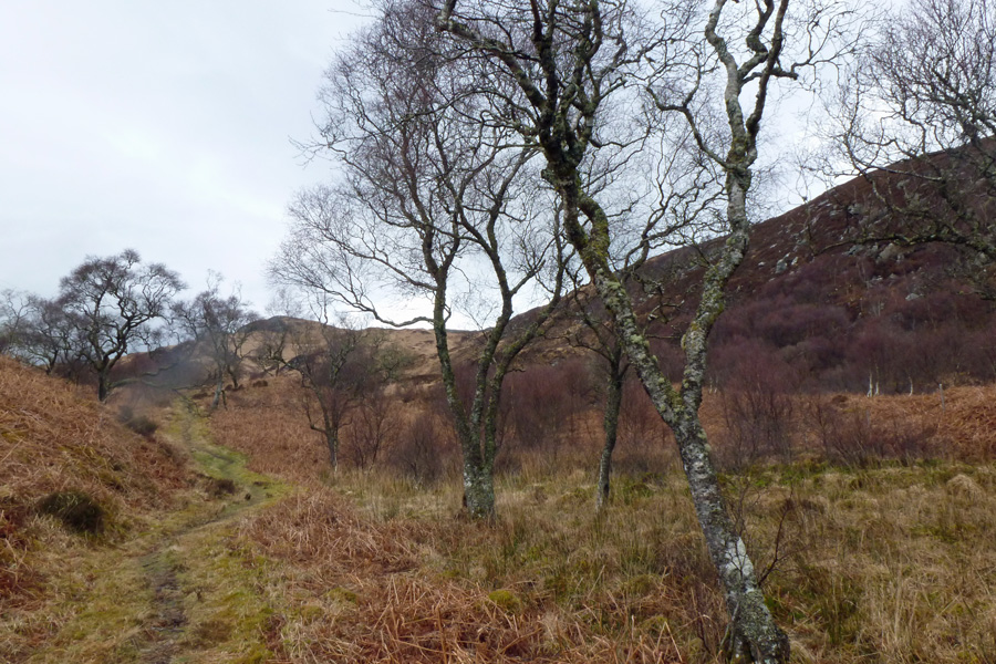 Walking through heathland at Glenborrodale