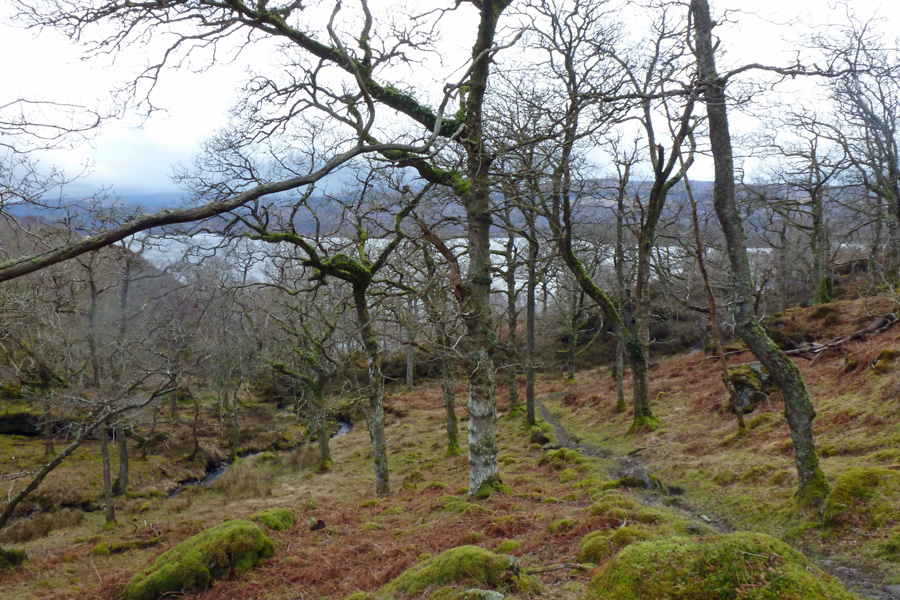 Walking through the woods at Glenborrodale
