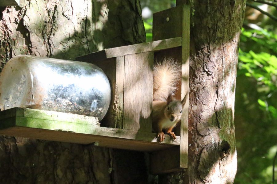 There are a variety of different feeders at Inchree