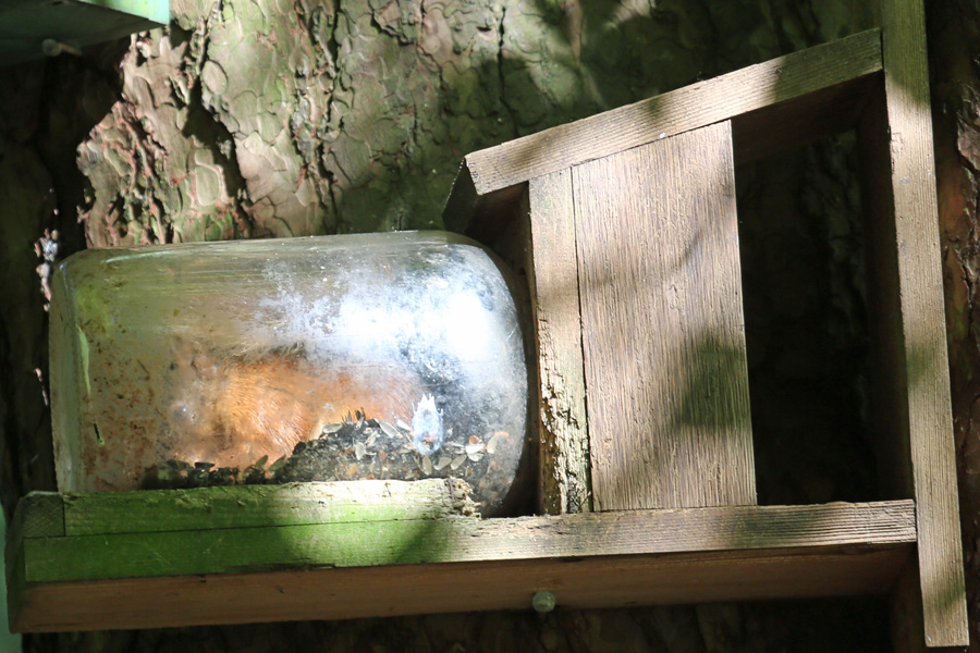 Squirrel in a bottle at Inchree