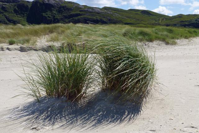 New dunes in the making at Sanna Bay