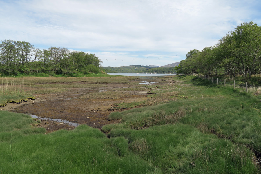 Salt marsh on the northen flank of Shian Wood Nature Reserve