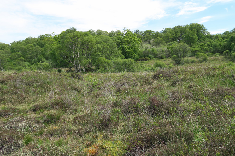 Heathland near the entrance to Shian Wood reserve