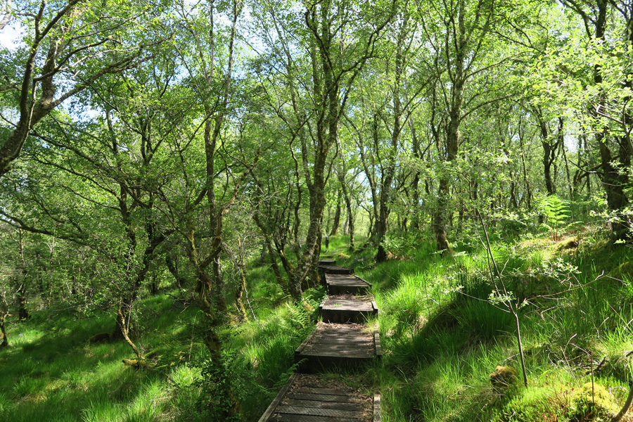 A section of boardwalk on the circular path through Shian Wood