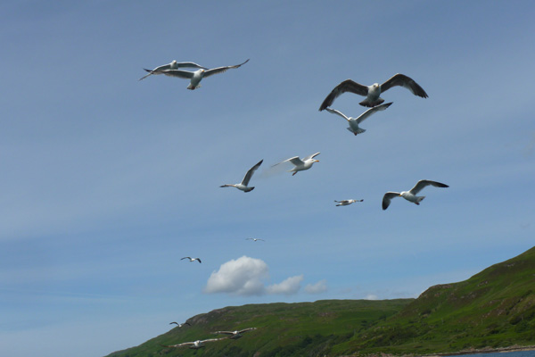 Gulls commonly follow fishing boats