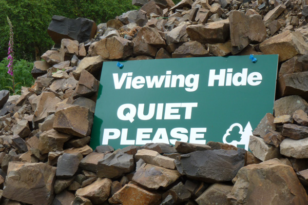 Be very quiet as you approach the viewing hide