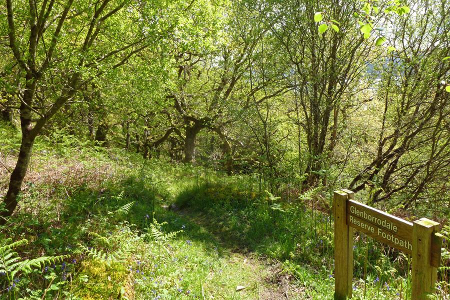 The wildlife walk follows the RSPB Glenborrodale nature trail