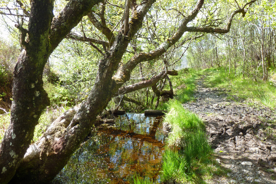 This small dam has standing water all year and is a good place for dragonflies