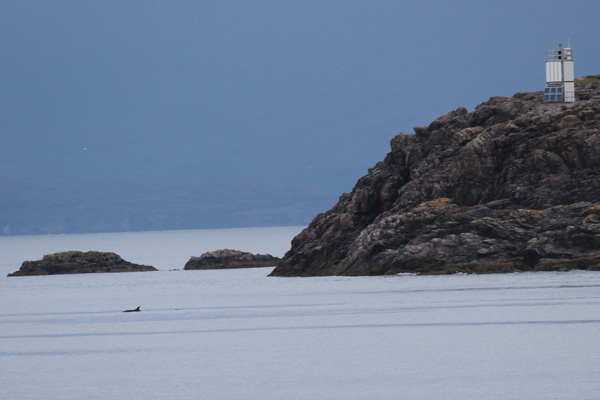 Bottlenose dolphin by The Point of Sleat