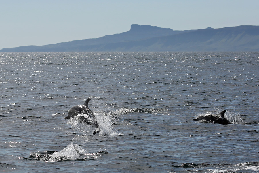 The Isle of Eigg is a great photographic backdrop on this Seafari wildlife cruise