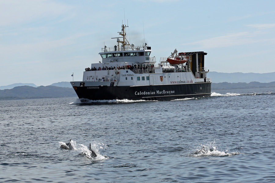 Dolphins approaching the port side of The Loch Nevis CalMac ferry