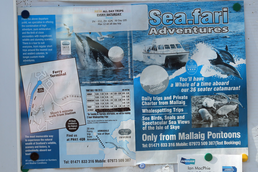 Poster advertising the Seafari Wildlife Cruise at Mallaig Marina